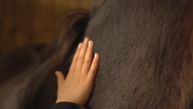 L'equitation en france