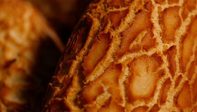 Festival des pains – 9 Le pain tigré